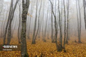 تصاویر زیبا از پاییز هزار رنگ ارسباران