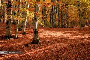عکس/ گلستان به رنگ پاییز