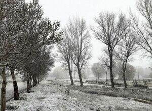 اولین تصویر از بارش برف در سرعین