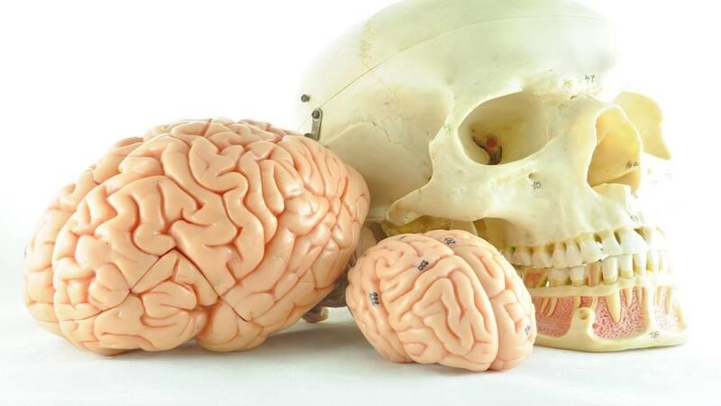 چرا مغز انسان رفته رفته کوچکتر میشود؟