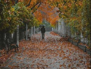 عکس/ قابی زیبا از پاییز شیراز