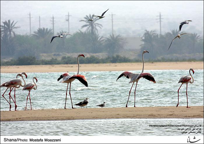 Image result for تصاویر خلیج نایبند