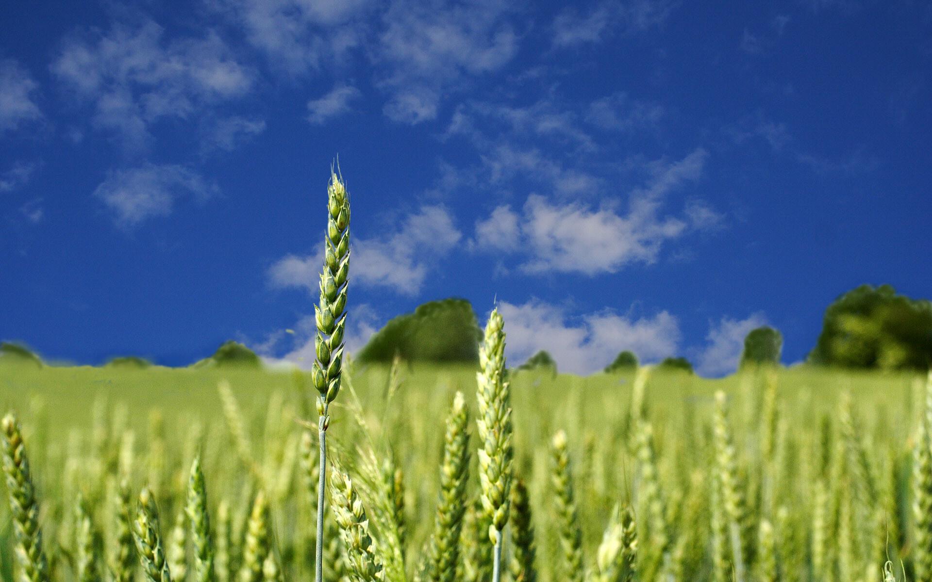 Afbeeldingsresultaat voor عکس های برنج