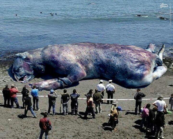 شایعه مشاهده موجودی عجیب در سواحل چالوس +عکس