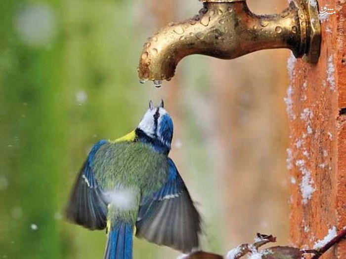 عکس/ صحنهای دیدنی از آب خوردن یک پرنده