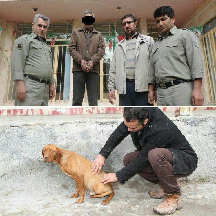ابتکار از سگها به جای انسانها حمایت میکند + تصاویر //