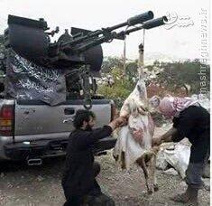 شکم چرانی تروریستهای القاعده در اطراف فوعه و کفریای محاصره شده+تصاویر