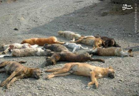 سگ کشی گسترده افراد ناشناس در تبریز +عکس