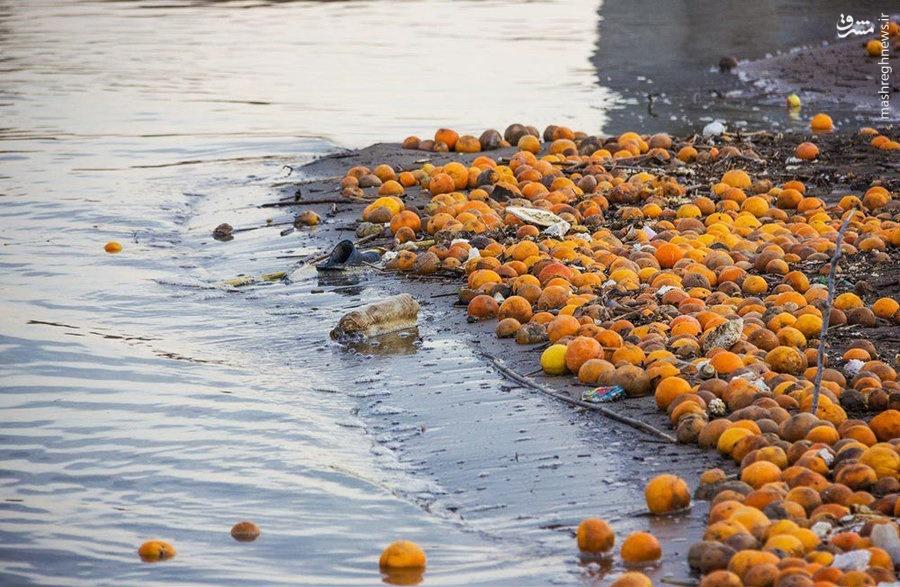 میوه ایرانی به دریا ریخته میشود؛ آبمیوه خارجی وارد میشود +جدول