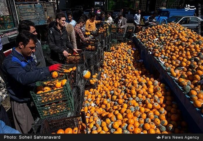 پشت پرده فاسدسازی و دفن محصولات کشاورزی در دولت یازدهم چیست؟/ پیدا کنید پرتقال فروش را+ تصاویر