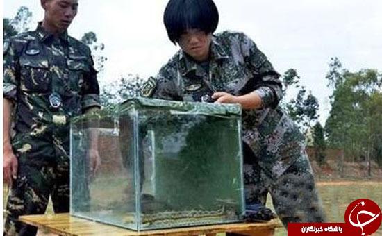 جویدن کِرم راهی برای ورود کماندوهای زن به ارتش چین+ تصاویر