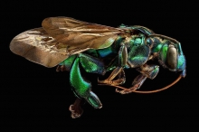 عکس/ حشرات را با این وضوح دیدهاید؟