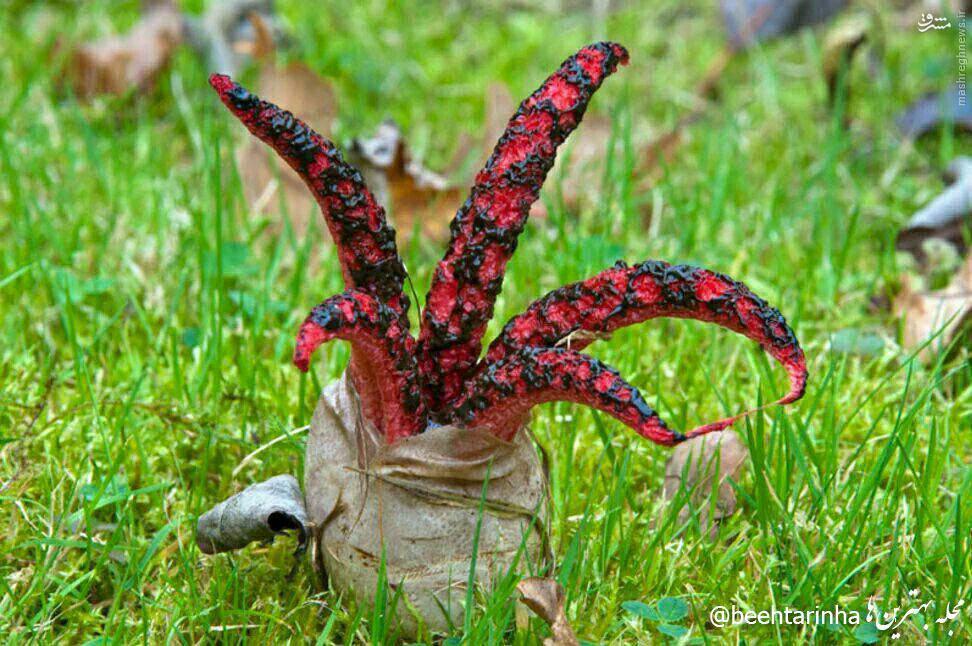 عکس/ انگشتان شیطان در استرالیا