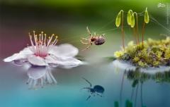 تصویر زیبا از عنکبوت بندباز