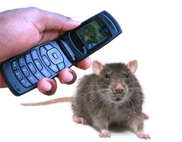 تشعشعات تلفنهمراه و BTS ها چه خطراتی دارند ؟