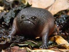 عکس/ عجیب و غریب ترین قورباغه های دنیا