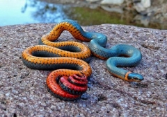 عکس/ حیوانات رنگارنگ