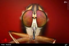 عکس/ حشرات را از نزدیک ببینید