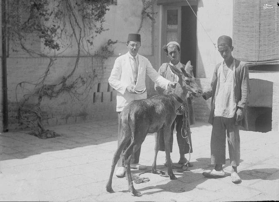 عکس/ حیوان خانگی متفاوت در دوره قاجار