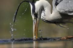 تصاویری دیدنی از دنیای پرندگان