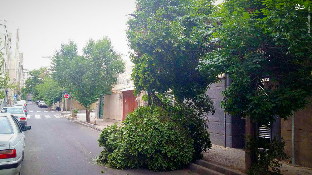 عکس/ پیامد طوفان عصر امروز در یکی از خیابانهای تهران