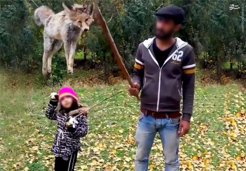 کشتار سریالی روباه ادامه دارد +عکس