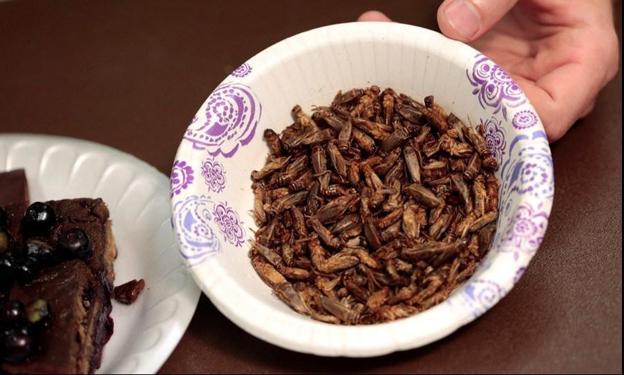 پروژه محبوبسازی خوردن حشرات در ژاپن +تصاویر