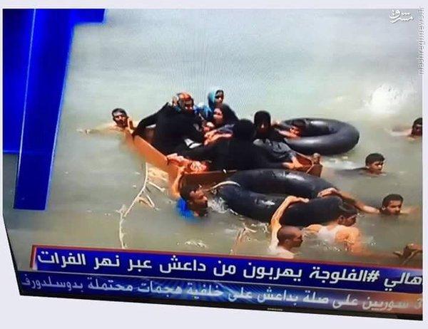 فرار ساکنین فلوجه از چنگ داعش+عکس