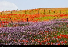 عکس/ مطمئن باشید اینجا ایران است