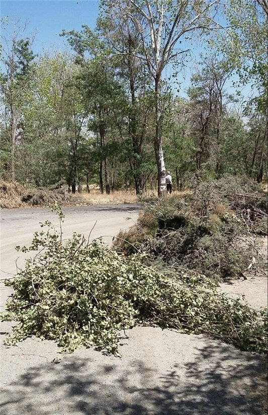 قطع درختان ورزشگاه آزادی همچنان ادامه دارد +تصاویر