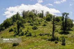 عکس/ یکی از کهن ترین جنگلهای دنیا در ایران