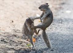 عکس/ سنجابهای کونگ فو کار