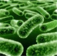 هشدار وزارت بهداشت درباره تب مالت