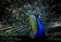 عکس/ باغ پرندگان اصفهان
