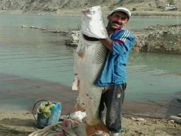 عکس/ صید ماهی عظیمالجثه در گچساران