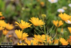 عکس/ باغ گلهای اصفهان