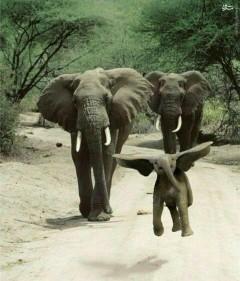 عکس/ سرخوشی به سبک بچه فیل