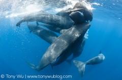 عکس/ جمع شدن نهنگها در اقیانوس هند