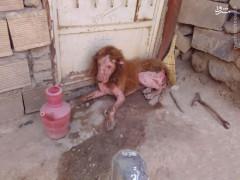 عکس/ پیدا شدن حیوانی عجیب در همدان