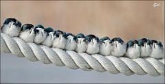 عکس/ خوابیدن دسته جمعی پرندگان