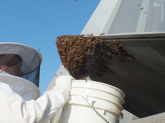زنبورها و اف 22