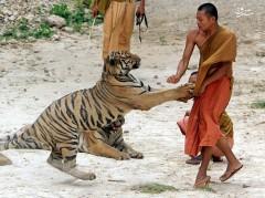 عکس/ حمله حیوانات به انسان