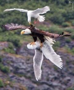 عکس/ صحنه ای شگفت انگیز در حیات وحش