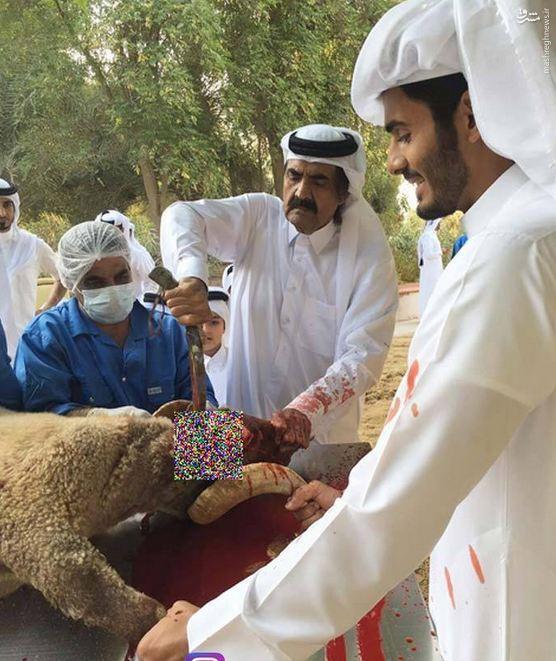 عکس/ امیر قطر در حال قربانی کردن