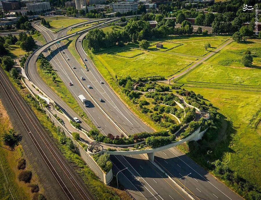 نمایی فوق العاده از پل عابرپیاده در شهر ونکوور!
