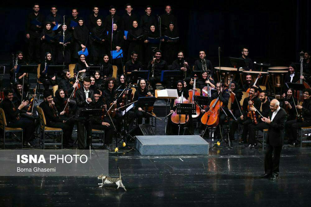 عکس/ گربهای که مهمان ناخوانده کنسرت شد