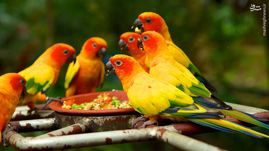 بزرگترین باغ پرندگان جهان در سنگاپور