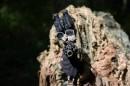 پیشرفتهترین سلاح انفرادی ایران تهاجمیتر شد/ «فاتح» سپاه در ردیف M4 و HK-416 +عکس