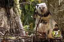 فیلم دیدنی از حیات وحش و زندگی حیوانات