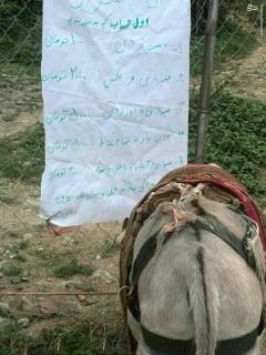 عکس/ نرخ الاغ سواری در مازندران
